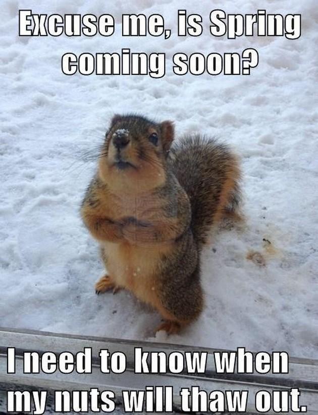 Monday morning joke animal humor catie cordero - Funny animal pictures with words ...