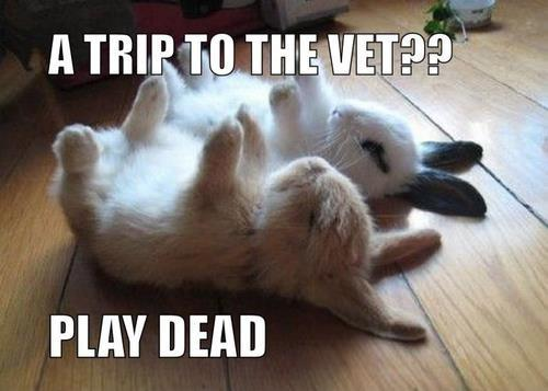 Funny-Bunnies-playing-dead