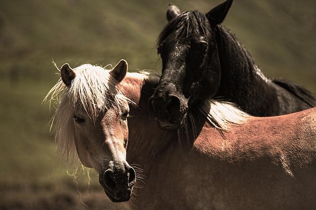 play-horses-853894_640